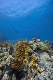 Barriera corallina Immagine Stock