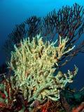 Barriera corallina Immagine Stock Libera da Diritti