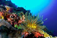 Barriera corallina Immagini Stock