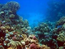 Barriera corallina 2 Fotografia Stock Libera da Diritti
