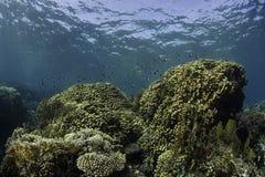 Barriera corallina immagini stock libere da diritti
