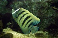 Barriera corallina Fotografia Stock Libera da Diritti