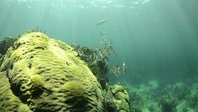 Barriera corallina stock footage