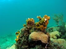 Coral Reef fotografie stock libere da diritti
