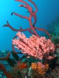 Barriera corallina Fotografia Stock