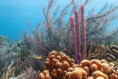 Barriera corallina caraibica Fotografia Stock Libera da Diritti