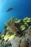 Barriera corallina caraibica Fotografia Stock