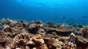 Barriera corallina con abbondanza del pesce Immagine Stock Libera da Diritti