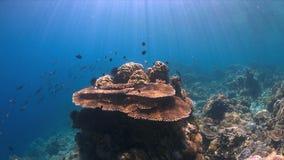 Barriera corallina con abbondanza del pesce Fotografie Stock Libere da Diritti