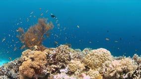 Barriera corallina con Anthias ed i Damselfishes Fotografie Stock