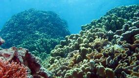 Barriera corallina con i coralli duri al Mar Rosso Fotografia Stock