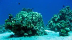 Barriera corallina con i coralli duri al Mar Rosso Fotografia Stock Libera da Diritti