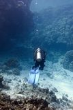 Barriera corallina con i coralli duri ed operatore subacqueo al fondo del mare tropicale Fotografia Stock