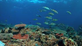 Barriera corallina con i coralli duri sani Fotografie Stock