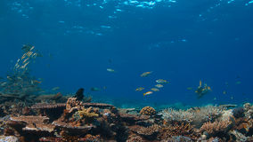 Barriera corallina con i coralli duri sani Immagini Stock Libere da Diritti