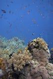Barriera corallina con i pesci fotografia stock