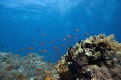 Barriera corallina con i pesci immagini stock