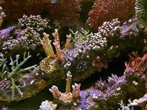 Barriera corallina con i pesci esotici al mare tropicale variopinto Immagine Stock Libera da Diritti