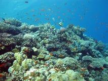 Barriera corallina con il corallo del fuoco e di lavori forzati e pesci esotici al fondo del mare tropicale Fotografia Stock Libera da Diritti
