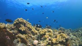Barriera corallina con il pesce di abbondanza Immagine Stock Libera da Diritti