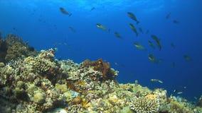 Barriera corallina con il pesce di abbondanza Immagini Stock Libere da Diritti