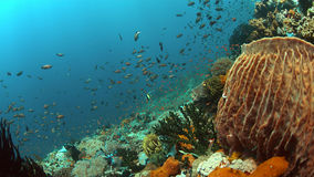 Barriera corallina con il pesce di abbondanza Fotografie Stock Libere da Diritti
