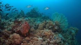Barriera corallina con il pesce di abbondanza Immagine Stock