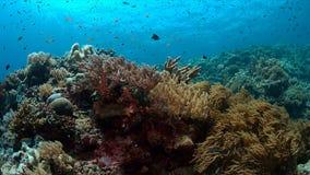 Barriera corallina con il pesce di abbondanza Immagini Stock