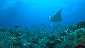 Barriera corallina con il pesce di abbondanza Fotografia Stock