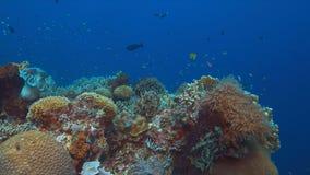 Barriera corallina con il pesce di abbondanza Fotografia Stock Libera da Diritti