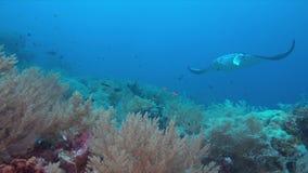 Barriera corallina con la manta Fotografia Stock Libera da Diritti