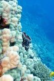 Barriera corallina con la spugna del mare ed i coralli duri Fotografia Stock Libera da Diritti