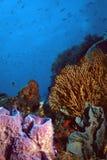 Barriera corallina della st Vincent Fotografia Stock Libera da Diritti