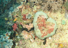 Barriera corallina di cuore Fotografia Stock Libera da Diritti