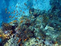 Barriera corallina e pesce Immagini Stock