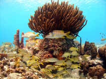 Barriera corallina e pesci Fotografie Stock Libere da Diritti