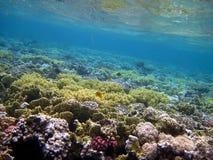 Barriera corallina e pesci Fotografie Stock