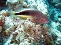 Barriera corallina e pesci Fotografia Stock