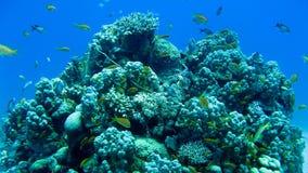 Barriera corallina e pesci tropicali Immagine Stock