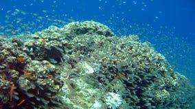 Barriera corallina e pesci tropicali Fotografie Stock Libere da Diritti