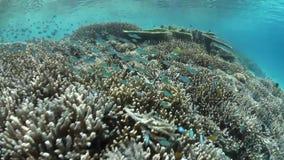 Barriera corallina e pesci tropicali archivi video