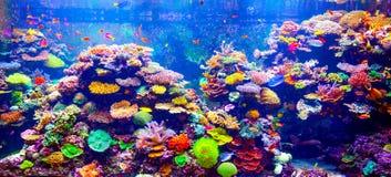 Barriera corallina e pesci tropicali Fotografia Stock Libera da Diritti