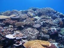 Barriera corallina e pesci tropicali Immagine Stock Libera da Diritti