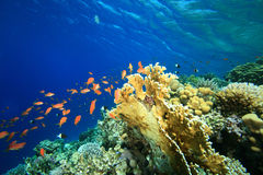 Barriera corallina e pesci tropicali Fotografie Stock