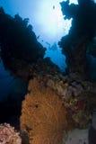 Barriera corallina ed operatori subacquei. Fotografia Stock