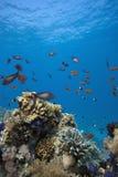 Barriera corallina esotica Immagini Stock