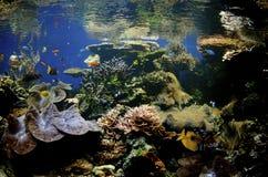 Barriera corallina hawaiana Immagini Stock