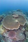 Barriera corallina incontaminata fotografia stock libera da diritti