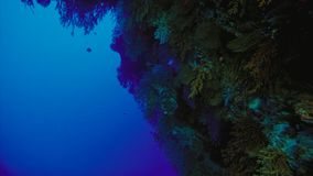 Barriera corallina, la Grande barriera corallina, Australia Paesaggio subacqueo fotografia stock libera da diritti