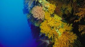 Barriera corallina, la Grande barriera corallina, Australia Paesaggio subacqueo fotografia stock
